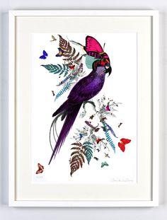 Kristjana Williams - Parrot Butterfly poster
