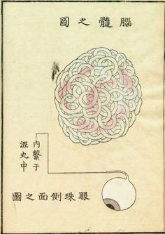 Eye and Brain - from 'Kaishi Hen, the Dissection of Dead Bodies', an anatomical atlas by Kawaguchi Shinnin published in Japan, 1802