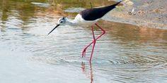 Los humedales desaparecen y son claves para la biodiversidad Delta Del Ebro, Fauna, Bird, Animals, Fresh Water, National Parks, Agriculture, News, Animales