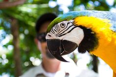 Escape the week to somewhere tropical. We can definitely assist with that! Cruise with us to our tropical isle at 1:30! #JungleQueenRiverboats #DiscoverFtLauderdale #TropicalIsle #TropicalAnimals #TropicalRadness