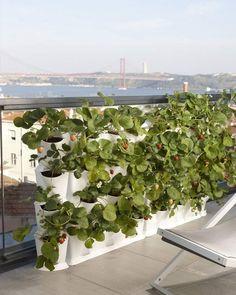 Minigarden Vertical verticale tuin - Wit