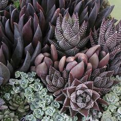 Absolutely Beautiful Combination of Succulents by Linda Estrin Garden Design.