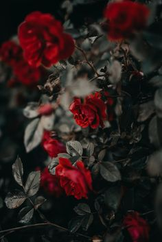 Most beautiful iphone wallpapers - Page 30 — wallpaper Flower Iphone Wallpaper, Iphone Background Wallpaper, Rose Wallpaper, Scenery Wallpaper, Flower Backgrounds, Aesthetic Iphone Wallpaper, Nature Wallpaper, Aesthetic Wallpapers, Iphone Wallpapers