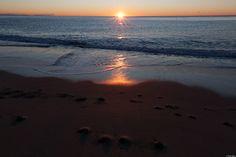 è nato! - e finalmente il sole arriva sulla sabbia e la accarezza... le immagini di quel giorno sono perfette: ho sempre preferito il mare agitato ma quella era la calma giusta che si addiceva alla scena.  Era l'armonia perfetta del tutto e anch'io non potevo sbagliare: l'esposizione è stata esatta, il contrasto naturalmente equilibrato, nessun riflesso indesiderato. Ognuno di noi conosceva la sua parte.