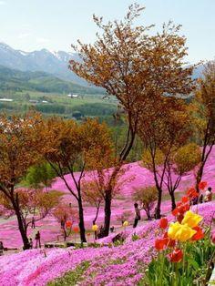 Beautiful landscape in Hokkaido, Japan. Beautiful World, Beautiful Gardens, Beautiful Flowers, Beautiful Places, Beautiful Pictures, Beautiful Beautiful, Flower Carpet, Parcs, Amazing Nature