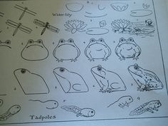 What to Draw and How to Draw It Free old drawing book showing how to draw a frog and tadpole Book Drawing, Drawing Lessons, Drawing Sketches, Art Lessons, My Drawings, Drawing Ideas, What To Draw, You Draw, Nature Journal