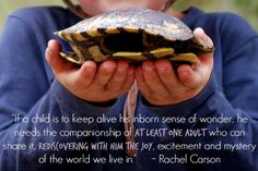 Rachel Carson Quote Rediscovering Nature An Everyday Story 30 Days TYP