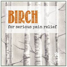 Birch is a powerful pain reliever and important in our arsenal of naturally powerful pain relief! There was a time when my sisters and I pooled our Birch for emergency pain purposes when my sister's husband was injured at work.  Painful nerve damage was gratefully relieved by layering Birch with Helichrysum (for nerve damage). Enjoy …