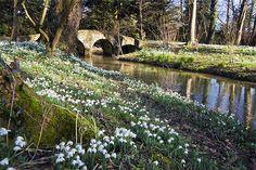 Snowdrops, Walsingham Abbey, Norfolk, England by Stephen Mole