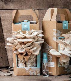 indoor mushroom growing kit