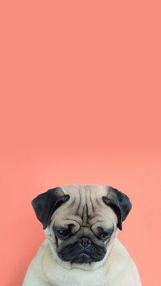 dog wallpaper \ dog wallpaper + dog wallpaper iphone + dog wallpaper for walls + dog wallpaper aesthetic + dog wallpaper pattern + dog wallpaper cute + dog wallpaper iphone backgrounds + dog wallpaper cartoon Dog Wallpaper Iphone, Cute Dog Wallpaper, Animal Wallpaper, Disney Wallpaper, Wallpaper Gatos, Plain Wallpaper, Beautiful Wallpaper, Fall Wallpaper, Galaxy Wallpaper
