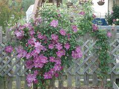 VA flower