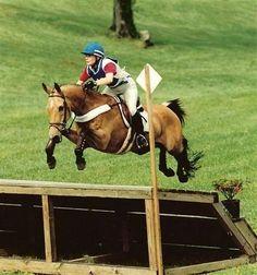 #Akhal-Teke Kandar, 1985 Akhal-Teke gelding. 1998 #USEF International horse of the year.