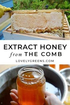 Lower Excess Fat Rooster Recipes That Basically Prime How To Extract Honey From The Comb: A Small-Scale Beekeeper Shares The Full Process Of Taking Honey From The Hives And Extracting It Into Jars How To Start Beekeeping, Beekeeping For Beginners, Beekeeping Course, Backyard Beekeeping, Hives And Honey, Honey Bees, Real Food Recipes, Healthy Recipes, Worm Farm