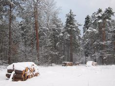 Nie było nas był las... 365/18 przez ArturG na tookapic
