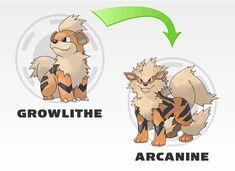 Znalezione obrazy dla zapytania pokemon growlithe  ewolucje