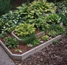 hosta flower garden ideas