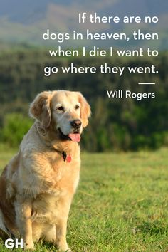 30 Dog Quotes That Every Animal Lover Will Relate To - Best Dog Quotes You will find the best quotes about dogs on my account. Best Dog Quotes, Dog Quotes Love, Dog Quotes Funny, Dog Memes, Funny Dogs, Quotes On Dogs, Quotes About Animals, Quotes About Dogs, Funny Puppies