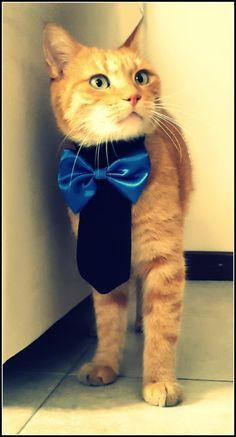 Pet Necktie Collar Dog Tie Collar Dog Wedding Collar by PinkBau