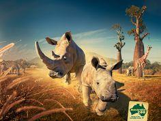 Africa at Australia Zoo #rhino #australiazoo #giraffe #wildlife #conservation