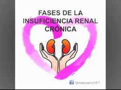 Fases de la insuficiencia renal crónica en perros y gatos - YouTube