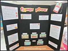 Science Fair made easy! Everything you need to make a science fair project with your class, including a mini-board each child can make and take home!