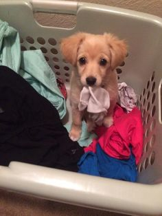 """My human taught me about this thing called 'laundry time' but I changed the name to 'FUN TIME'."" 