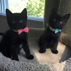 Kittens black cat and kittens Kittens And Puppies, Cute Cats And Kittens, Baby Cats, Kittens Cutest, Cute Puppies, Black Kittens, Like A Cat, I Love Cats, Pretty Cats