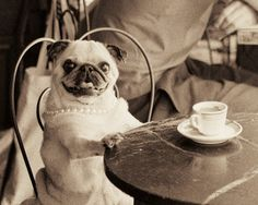 Cafe Pug with pearls
