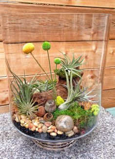 Terrarium with rocks, preserved moss, air plant, orchid bark, charcoal, stones, glass, wood, Billy balls, air plants, etc.