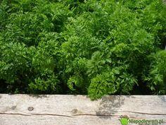 Herbs, Garden, Garten, Lawn And Garden, Herb, Gardens, Gardening, Outdoor, Yard