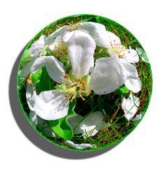 #flower,