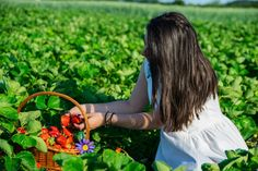 Interviu cu Maria Codrea despre doctorat in horticultura, capsuni, zootehnie si iar capsuni! Citeste-l pe madalinapintea.ro  #romaniangirl #romanianBlogger #blogger #fieldsofgreen