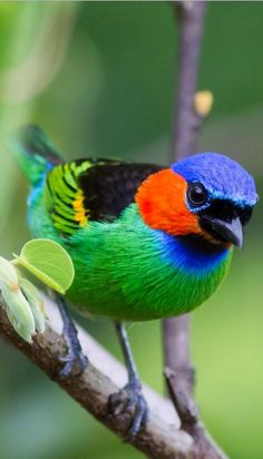 Bird colors Never cease to Amaze me. I Like Birds, Kinds Of Birds, Pretty Birds, Beautiful Birds, Animals Beautiful, Cute Animals, Rare Birds, Exotic Birds, Colorful Birds