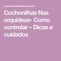 Cochonilhas Nas orquídeas- Como controlar – Dicas e cuidados
