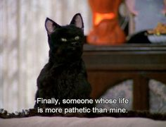 Salem is the best cat EVER! he just created my love to have a black cat..aha legend!
