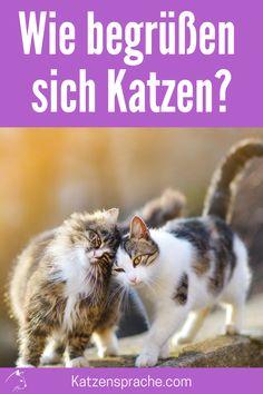 Das Begrüßungsverhalten unter Katzen ... #katze #katzen #katzentipps #katzenverhalten #katzenhacks #katzenwissen