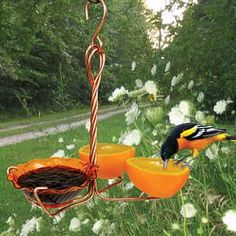 Oriole bird feeder - Heavy gauge copper wire, can hold oranges & grape jelly Oriole Bird Feeders, Diy Bird Feeder, Humming Bird Feeders, How To Attract Birds, Bird Food, Backyard Birds, Wild Birds, Garden Art, Garden Totems