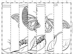 Life Cycle Agamographs and Sequencing Activities dessin Life Cycle Agamographs and Sequencing Activities Classroom Art Projects, Art Classroom, Science Projects, Diy Crafts For Kids, Crafts To Sell, Paper Art, Paper Crafts, Butterfly Project, Sequencing Activities