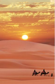 Best and oldest Desert Safari Dubai company. Desert Safari Dubai includes Dune Bashing, Sand Boarding, and BBQ dinner. 24 hours booking available Beautiful Sunset, Beautiful World, Beautiful Places, Wonderful Places, Amazing Places, Amazing Sunsets, Desert Sahara, Desert Sunset, Desert Tour
