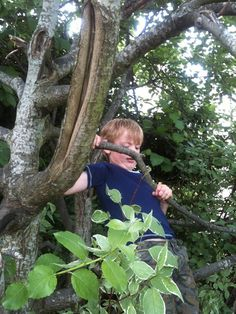 Climb a tree Single Mum, Cumbria, Lake District, Cheer, Feelings, Kids, Outdoor, Young Children, Outdoors