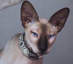 verycoolphotoblog.com cats - Google Search