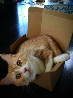 If I fit, I Sit #Cute #Funny