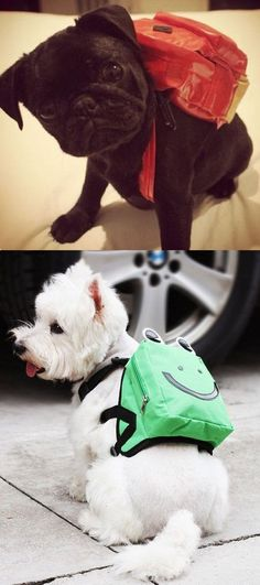 Because you can never have too many dogs in backpacks.