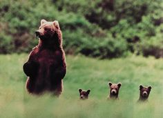 Mama bear - my kids will tell you mess with them and the Mama Bear in me comes out!