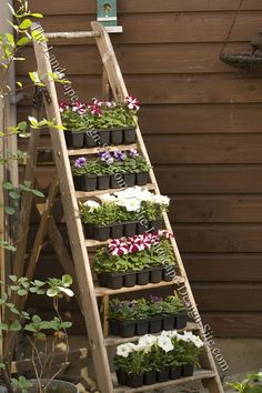 Oh I LOVE THIS!  Where do i get an old ladder?? Old Ladder Planter.  Not only does this old ladder create a unique piece of garden decor, it also creates a space saving set of shelves to display garden plants, etc.     A safety consideration about using elements like this as garden decoration is that even though it's now a set of shelves holding plants.