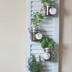 The best way to grow herbs!!