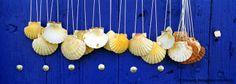 Shells, Camino de Santiago