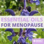 Best Essential Oils for Menopause