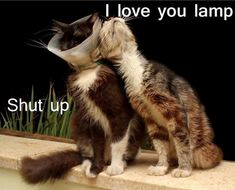 Funny Cat Pictures with Captions #dogsfunnywithcaptions